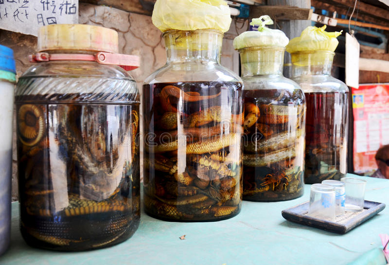 Laotian people made traditional liquor fermented and pickled wit. H poisonous animals and poisonous insect with herbal and other for drink liquor herbal medicine royalty free stock image
