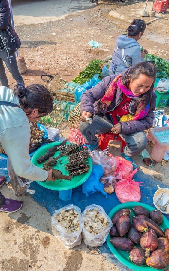 Laotiska kvinnor som säljer lösa fåglar på marknaden Phonsavanh Laos royaltyfri bild