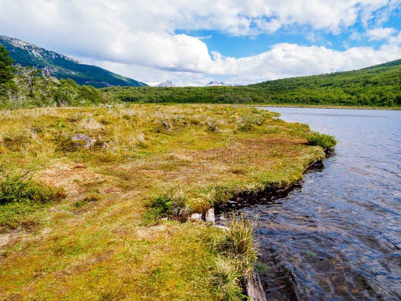 Lapataia zatoka w Terra Del Fuego parku narodowym blisko Ushuaia, Pat obraz stock