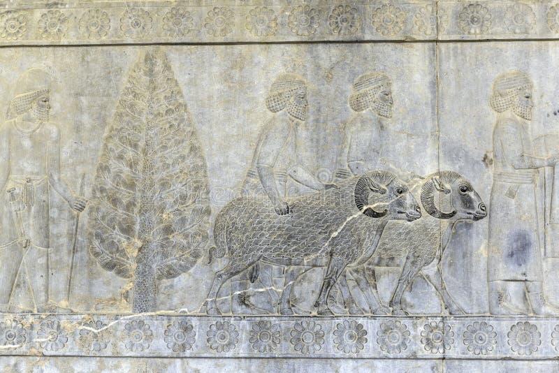 Lapidez les soulagements découpés de la ville antique de ruine de Persepolis Iran photos libres de droits