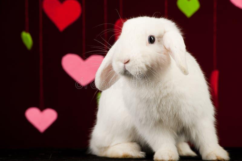 Lapin blanc avec des valentines. Lapin de Pâques image libre de droits