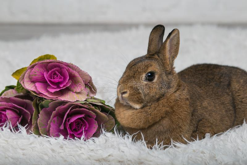 Lapin brun mignon avec des fleurs photographie stock libre de droits