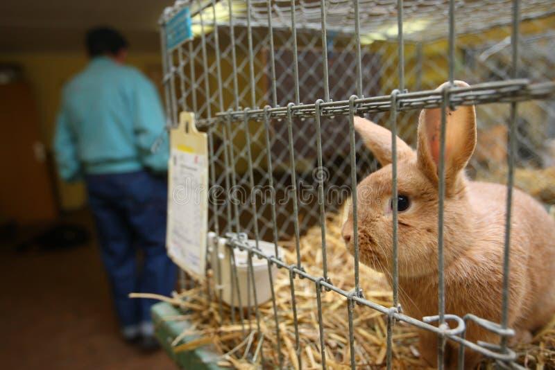 Lapin dans la cage photo libre de droits