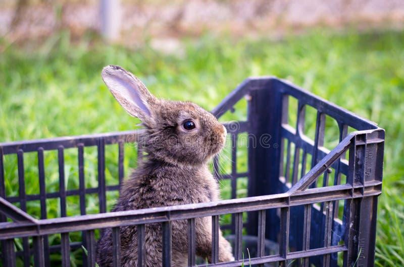Lapin dans la cage photos stock