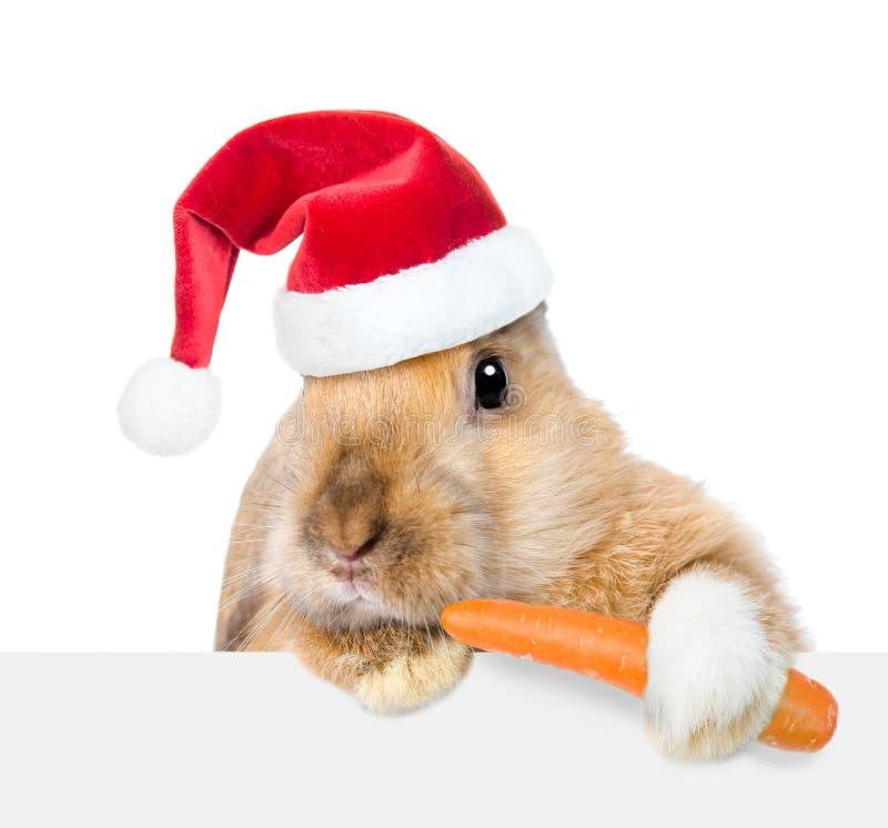 Lapin dans le chapeau rouge de Santa mangeant la carotte et regardant au-dessus d'une enseigne D'isolement sur le fond blanc image stock