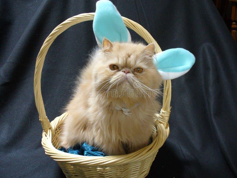 Lapin de chat persan image libre de droits