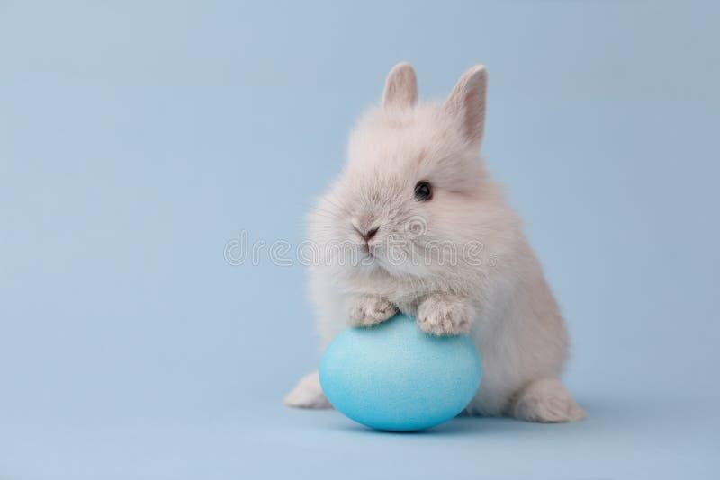 Lapin de Pâques avec l'oeuf sur le fond bleu photos stock
