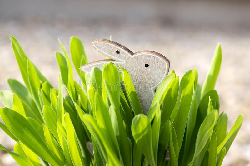 Lapin de Pâques dans l'herbe photographie stock
