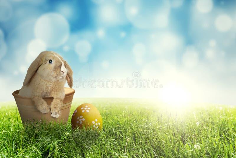 Lapin de Pâques dans le pot sur l'herbe photo libre de droits