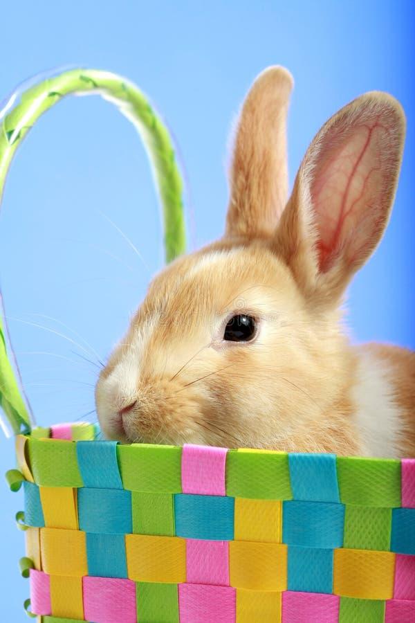 Lapin de Pâques dans un panier photo libre de droits