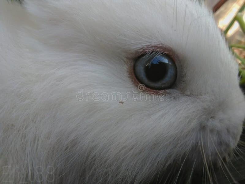 Lapin de yeux de galaxie image stock
