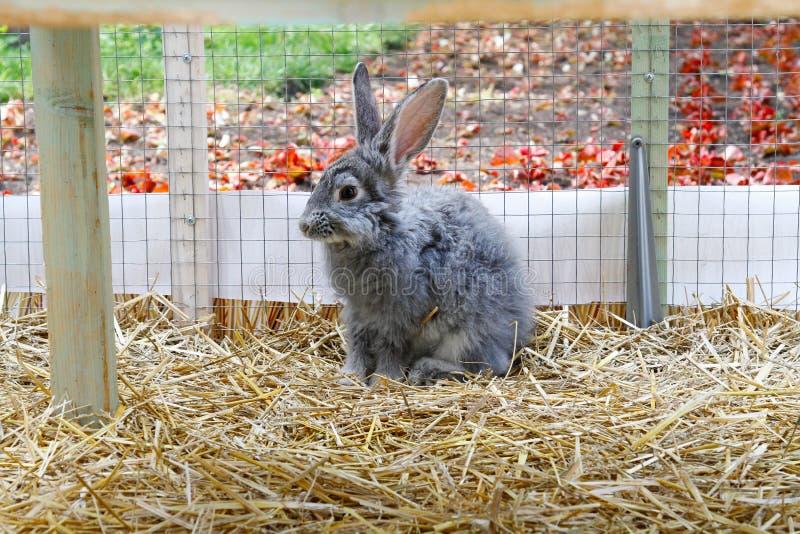 Lapin domestique gris dans une cage images libres de droits