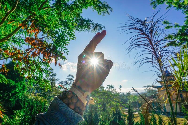 Lapin ensoleillé en parc vert photographie stock libre de droits