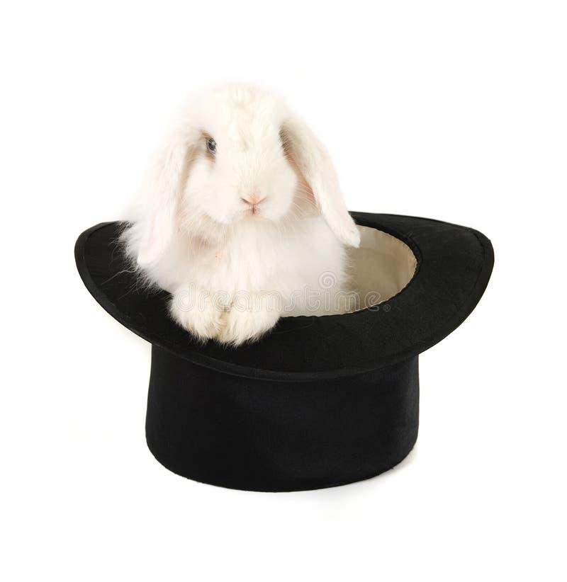 Lapin et chapeau noir photographie stock libre de droits
