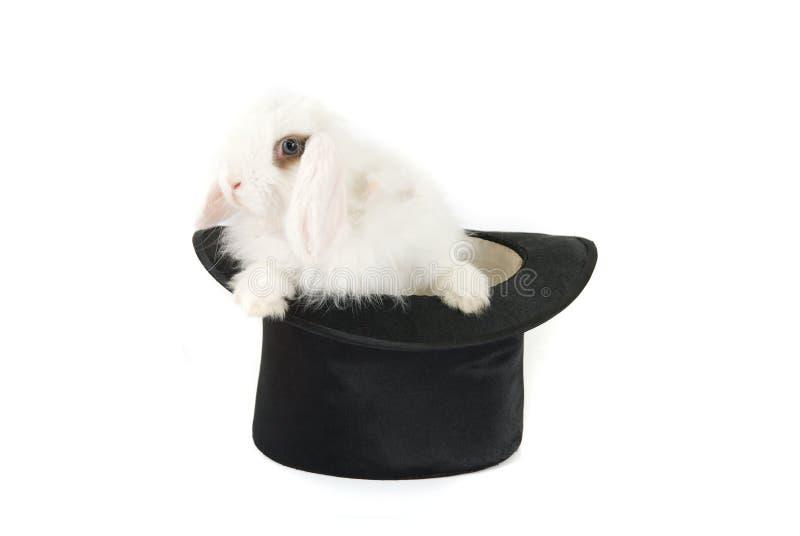 Lapin et chapeau noir images libres de droits