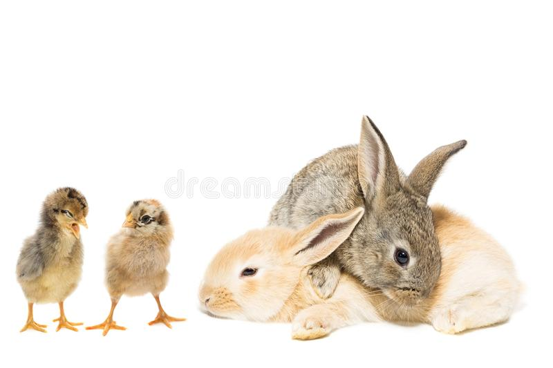 Lapin et poulet photos stock