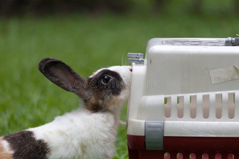 Lapin heureux se reposant près de la cage en parc photos stock