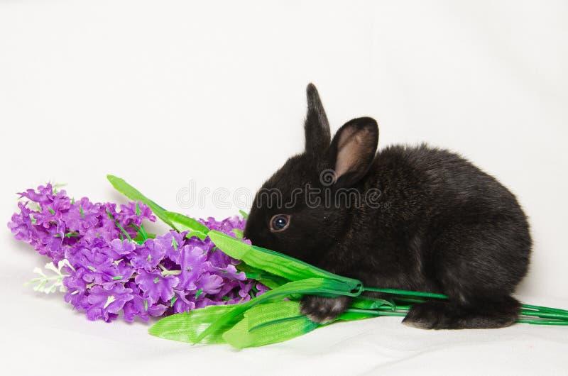 Lapin noir sur la fleur photos libres de droits