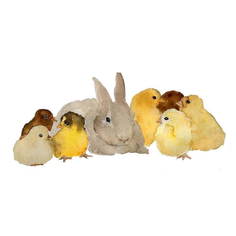 Lapin pelucheux gris de lièvres et petit poussin jaune, illustration naturaliste peinte à la main d'isolement d'aquarelle illustration libre de droits