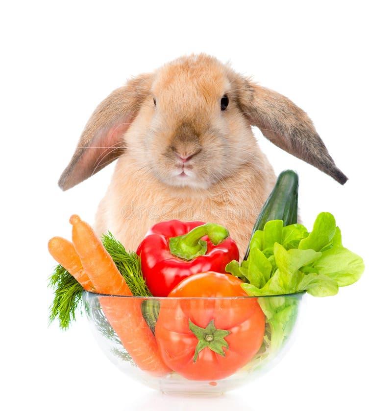 Lapin se reposant avec une cuvette de légumes D'isolement sur le blanc image stock