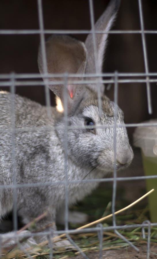 Lapin se reposant dans une cage image stock