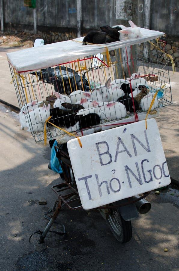 Lapin se vendant à Danang photo libre de droits