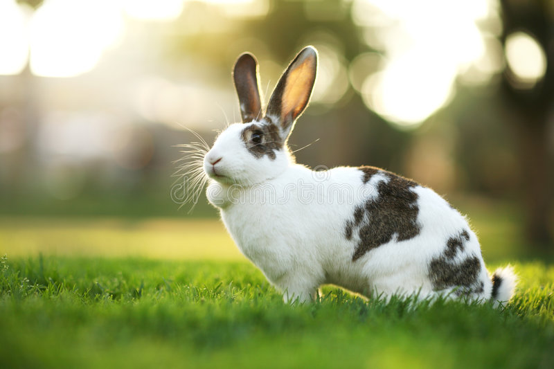 Lapin sur l'herbe images stock