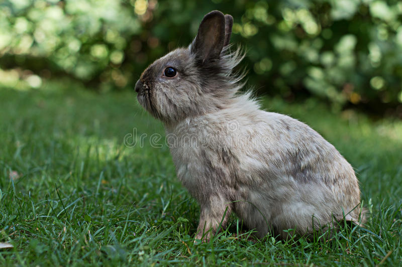Lapin sur l'herbe photo stock