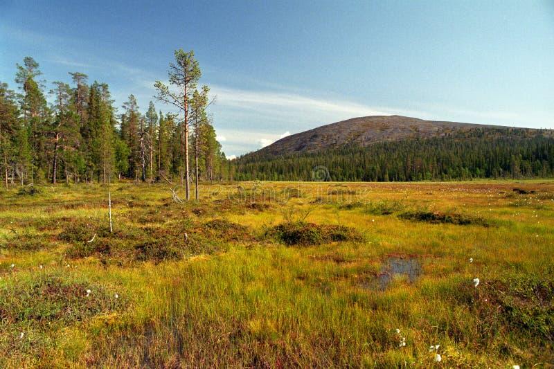 Download Lapin swamp stock image. Image of north, swamp, travel - 11538761