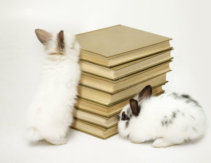 Lapins avec des livres photographie stock