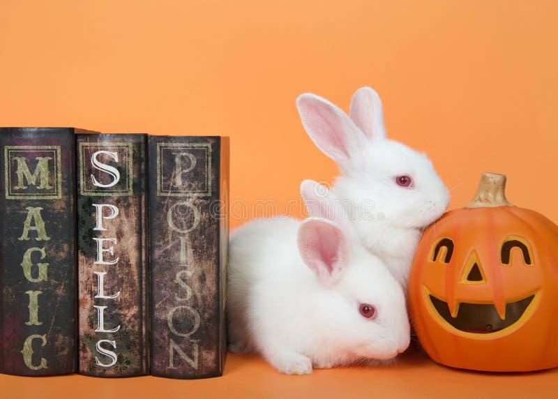 Lapins blancs de b?b? de Halloween photos stock