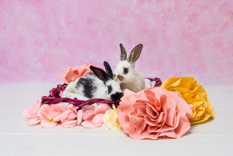 Lapins de Babby photo stock