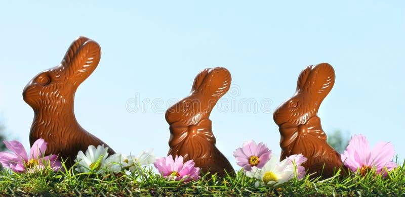 Lapins de chocolat dans l'herbe photographie stock libre de droits