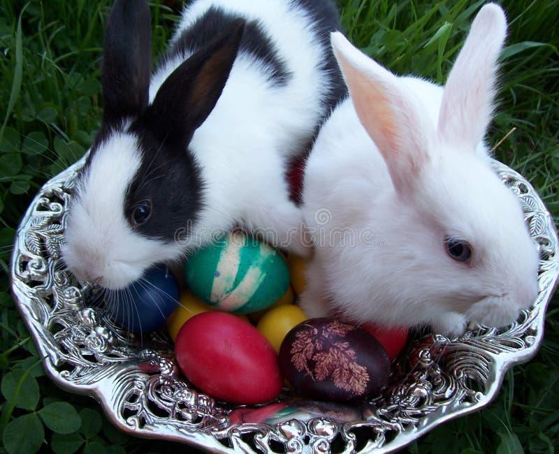 Lapins de Pâques photos libres de droits