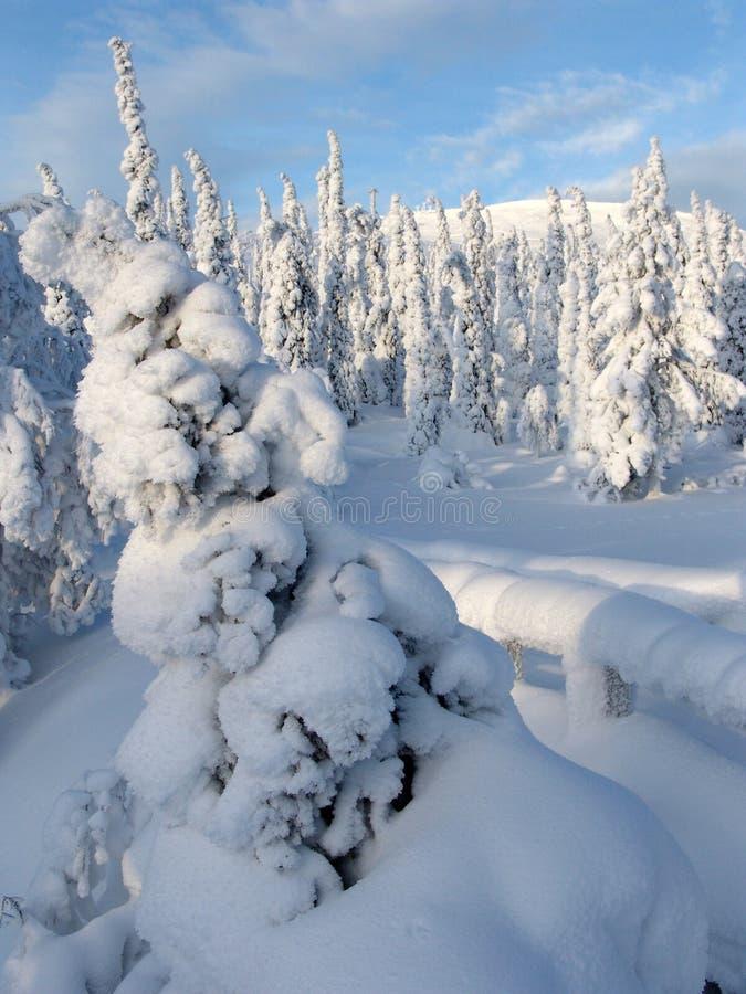 Lapland στοκ εικόνες
