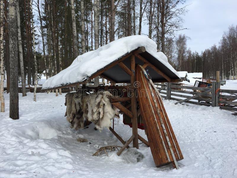 Reindeer skin in Finnish lapland royalty free stock photos