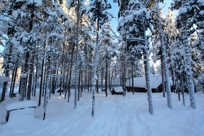 Lapland (Rovaniemi), Finland. Trees covered by snow in Finland royalty free stock photos