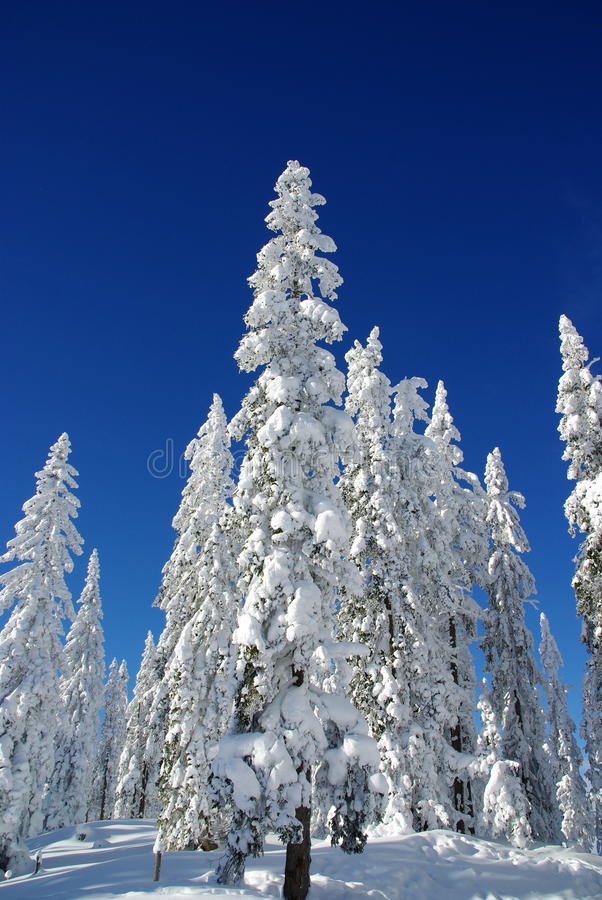 Download Lapland Winter stock image. Image of larch, alps, hiking - 17495585