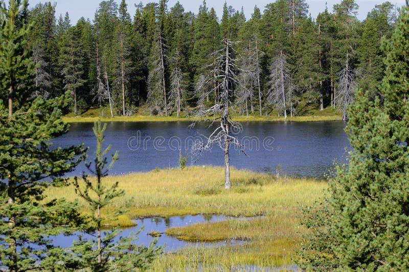 Laponia Nationalpark stockfotos