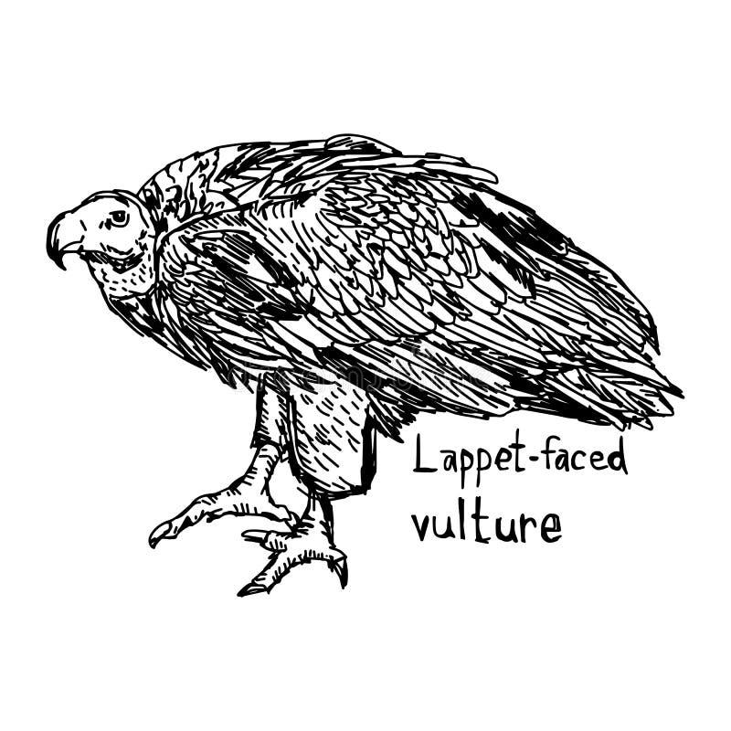 Lappet-лицый хищник - острословие эскиза иллюстрации нарисованное рукой иллюстрация штока