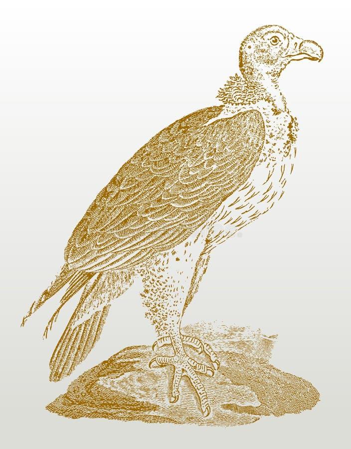 Lappet-лицый хищник или nubian tracheliotos torgos хищника сидя на утесе бесплатная иллюстрация