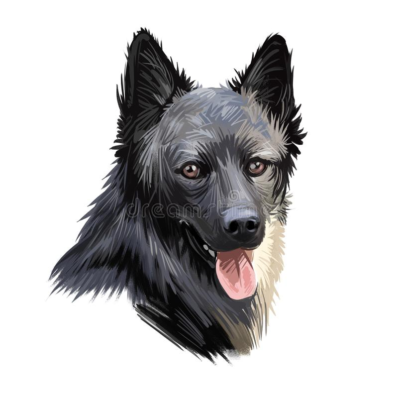 Lapponian herder dog canine closeup of pet digital art illustration. Lapinporokoira hound with stuck out tongue, lapsk vallhund. Originated in Finland. Portrait royalty free stock photography
