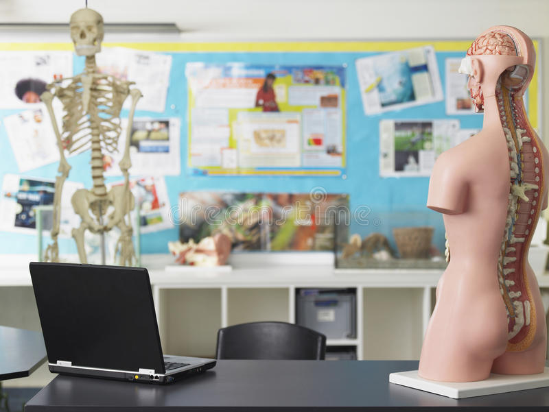 Laptop And Anatomical Model In Biology Class royalty free stock photos