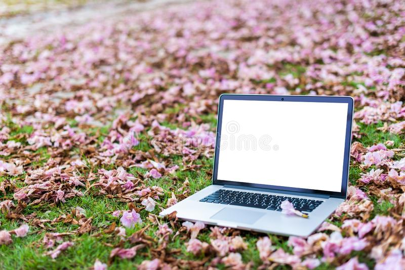 Laptop computers with pink flowers and green grass. Background stock photo