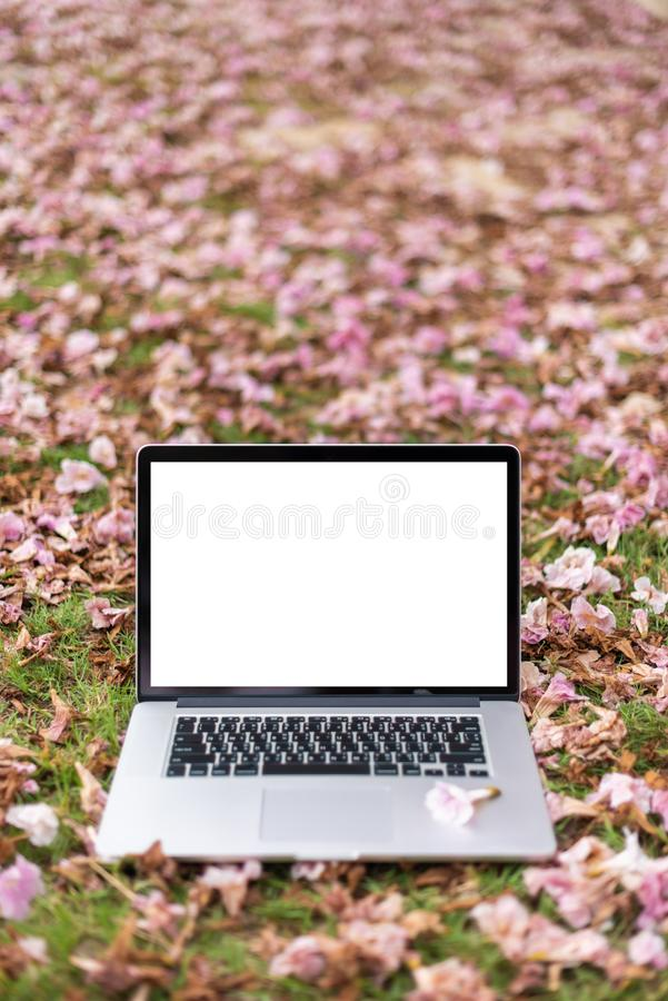 Laptop computers with pink flowers. And green grass background. Vertical royalty free stock photos