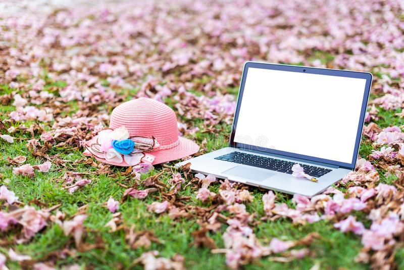 Laptop computers and pink hat with pink flowers. And green grass background royalty free stock images