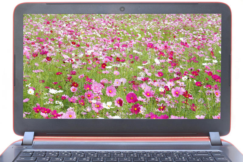 Laptop with cosmos flowers fields on screen. Isolated on white royalty free stock photo