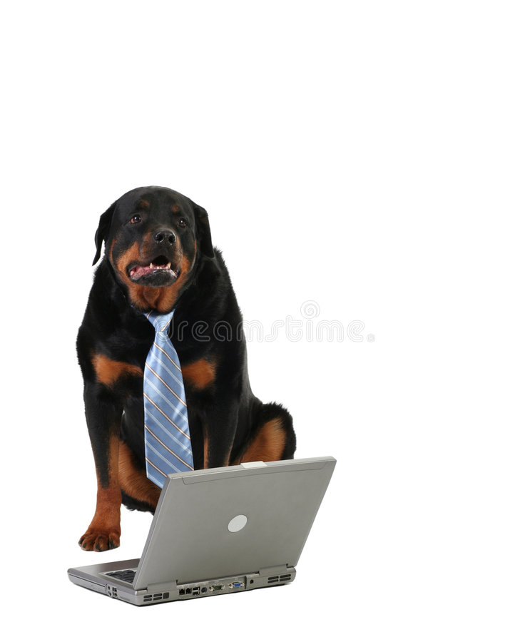Laptop and dog stock image
