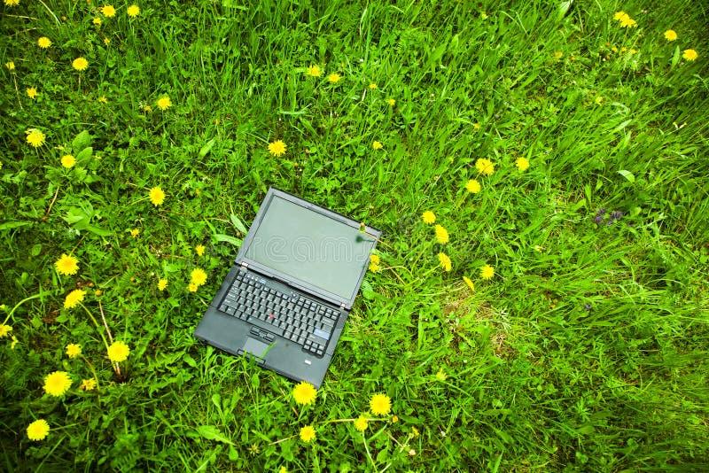 Laptop in gras stock afbeeldingen