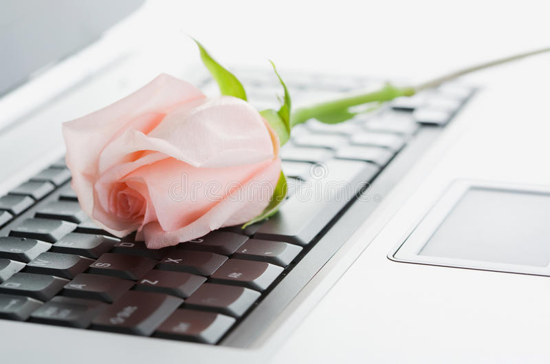 Laptop and Rose stock photos